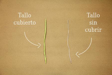 b_tallos