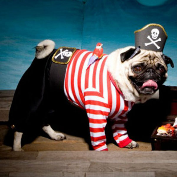 disfraz-de-pirata-para-perro