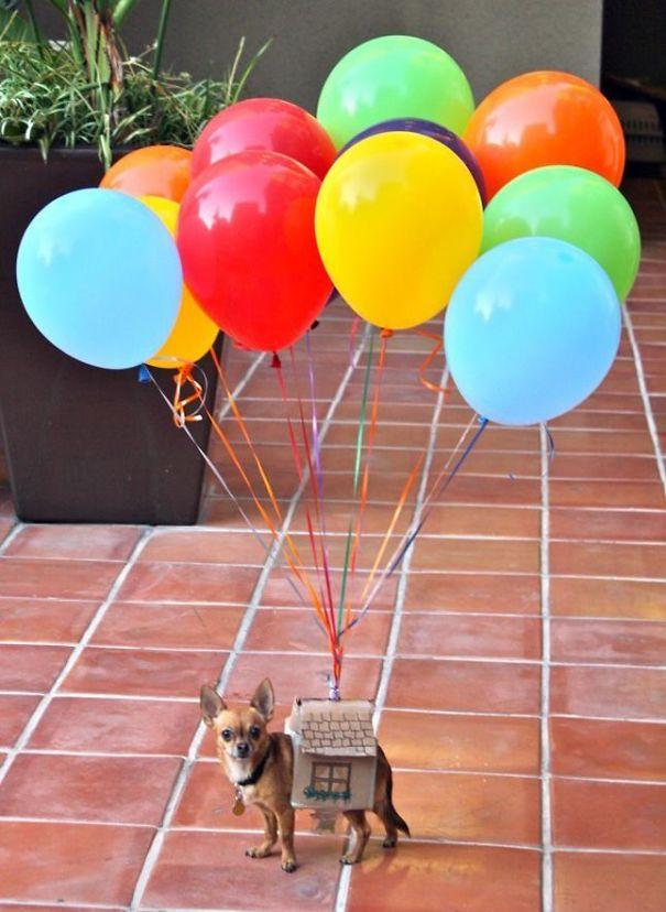 disfraz pixar up para perro